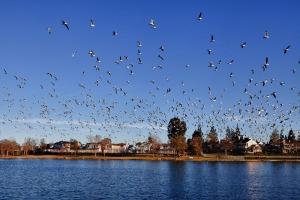 Birdsoverwoodbridge_vin_weathe